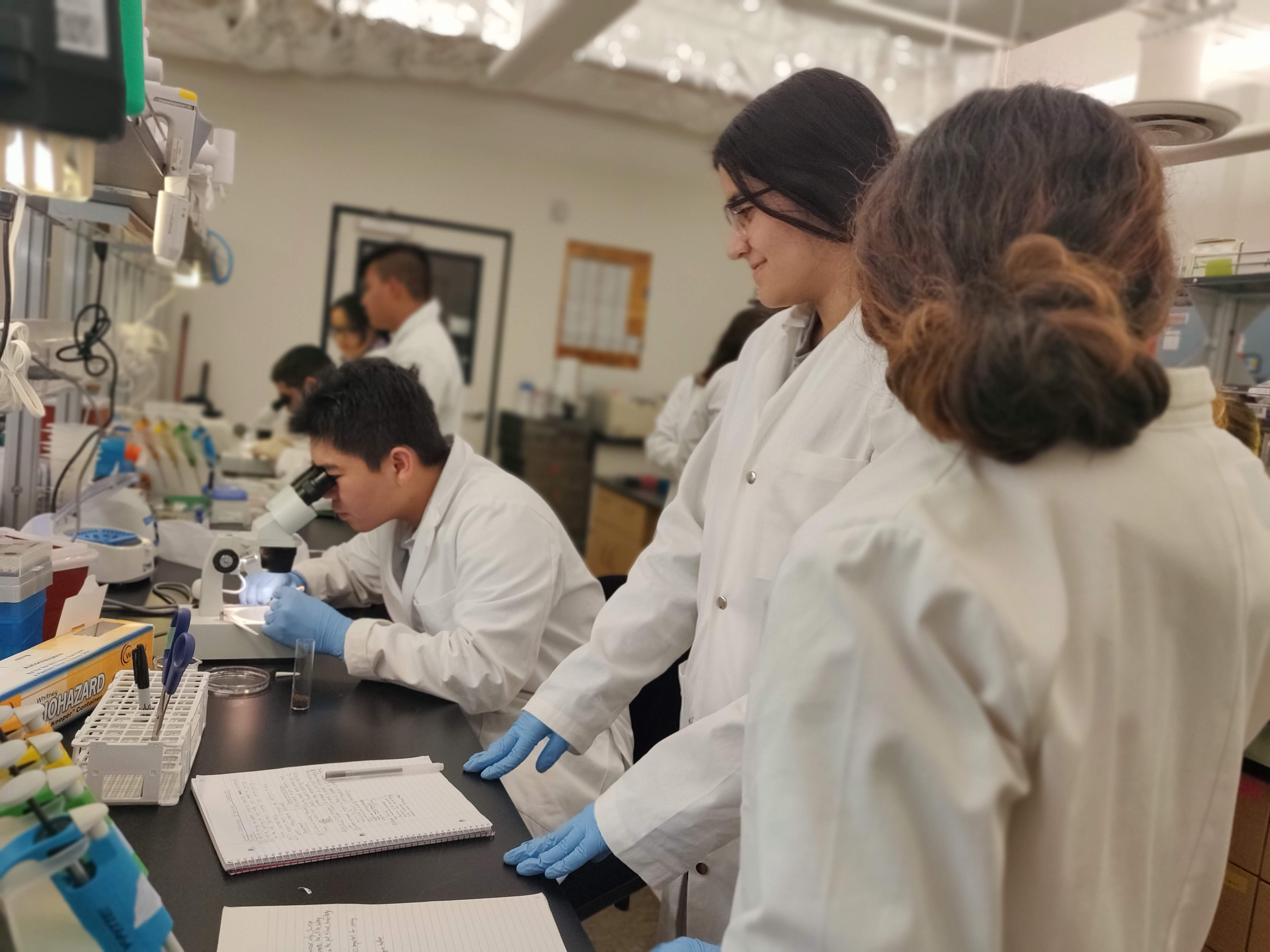 Students in the Boz Institute's research immersion course dissect fly brains